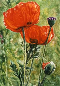 Papavers Weespertrekvaart (2002), watercolour 27 x 19 cm - Euro 550